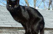 """Behandeling van uw kat met imidcloprid vlo medicatie zoals """"Voordeel"""""""