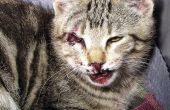 Homer's Odyssey, het verhaal van een kat en hoe je teveel kittens zonder te proberen, echt snel.