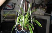 Hoe maak je een opknoping ingegoten plant touw houder: kinda