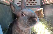 Bouwen van een sectionele konijnenhok