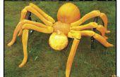Gazon Spider!!