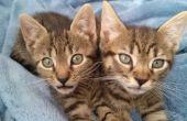Zorg voor kittens zwevend