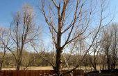 Uitsnijden naar beneden een boom in stukken