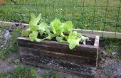 Plant vak