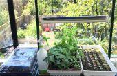 Urban Farming: Indoor Starter planten uit zaad