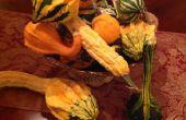 Groeiende kalebassen voor val op zonder kosten