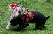 Ride 'em Cowboy hond kostuums