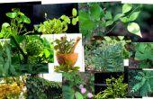 VERZAMELEN AYURVEDISCHE planten
