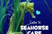 Inleiding tot de Seahorse zorg