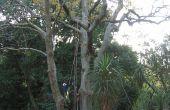 Hoe krijg ik een touw in een boom (zonder klimmen het)