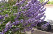 Distillatie proces lavendelolie stoom extractie scheiding snelkookpan nog voor £10 deel 2