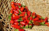 Snel, gratis en eenvoudig zonne-gedroogde pepers