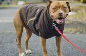 Canine Carhartt jas voor uw vriend!