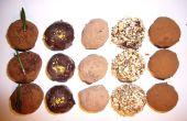 Anatomie van een chocolade truffel