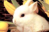 Fundamentele Live val voor konijnen, eekhoorns en andere beesten