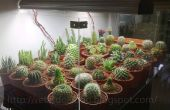 DIY Cactus Display Tank!