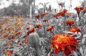 Bloemen altijd kleuren geven aan deze wereld van zwart-wit
