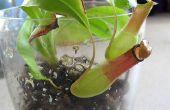 Chique en eenvoudige vleesetende Plant terraria