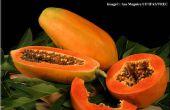 Met behulp van papaja als een multifunctionele huisgemaakte remidies