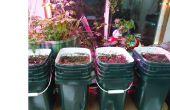 Hybride Aquaponic / soil overdekte wintertuin