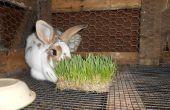 Kweken van je eigen konijn feed