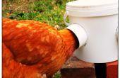 Super eenvoudige kip Feeder