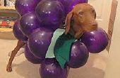 Maken van uw hond in A Bunch van druiven voor Halloween