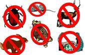 How to get rid van ongewenste dieren - bijgewerkt