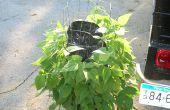 How To Grow een verticale Lima & Green Bean moestuin