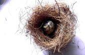 Make A Bird's Nest & eieren (diavoorstelling)