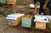 Hoe te maken van een Nucleus honingbij kolonie (en voorkomen dat gevestigde bijenkasten zwermen)