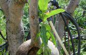 De hangende tuinen van Babylon (met pompoen!)