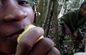Malagasi Jungle remedie: Multifunctionele citroen