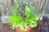 Hoe te genieten en Plant kleine zaden