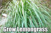 Hoe om te groeien van citroengras