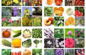 Het plannen van drie seizoenen van bee vriendelijke planten