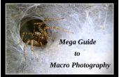 Mega gids tot de Macro Photography