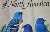 Een Complete gids naar vogels kijken