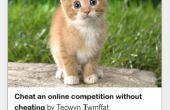 Hoe om te kijken na een kleine kitten