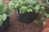 Hoe maak je een Plant Stand met tomaat kooi