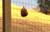 #hercules2016 pinecone Vogelhuis/waterbak