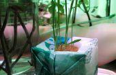 Kunststof groeien-bom: hydrocultuur van plastic zakken