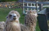Instructables - installatie A GATE voor Alpaca's IN THE BACKYARD