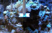 Aquarium schraper voor hardnekkige algen