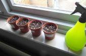 Vleesetende planten groeien! (met resultaat)