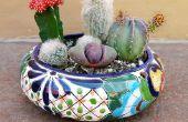Hoe te maken van een cactustuin schotel & houden van uw vinger wervelkolom gratis