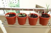 Home DIY zwaartekracht druppelirrigatie voor kruiden en planten