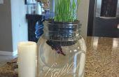 Gewoon blijven zwemmen Aquaponic - groeien tarwe gras