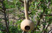 Eenvoudige kalebas Birdhouse met een tak
