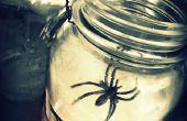 Spider Web lantaarns